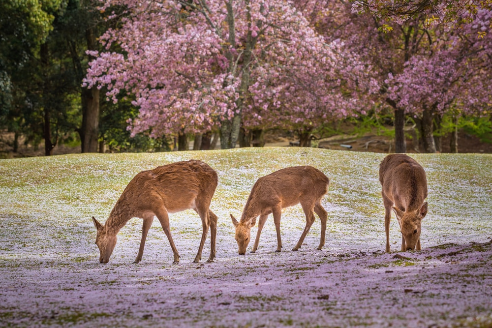 Must-Visit Places in Japan for Animal Lovers