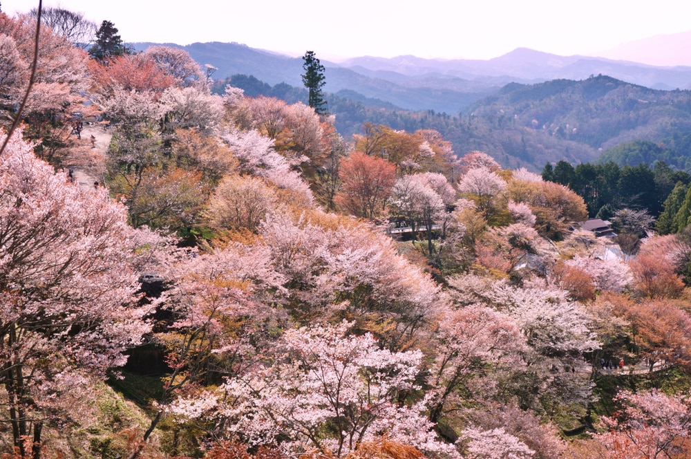 The Best Places to See Cherry Blossoms Throughout Japan