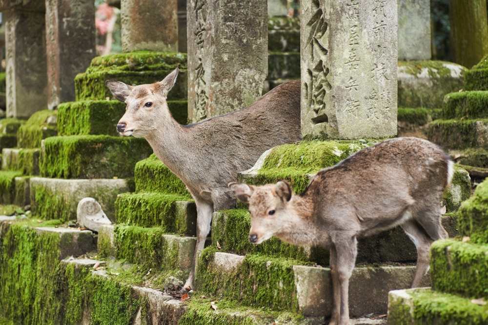 Top 10 Things to Do in Nara Outside of Nara Park