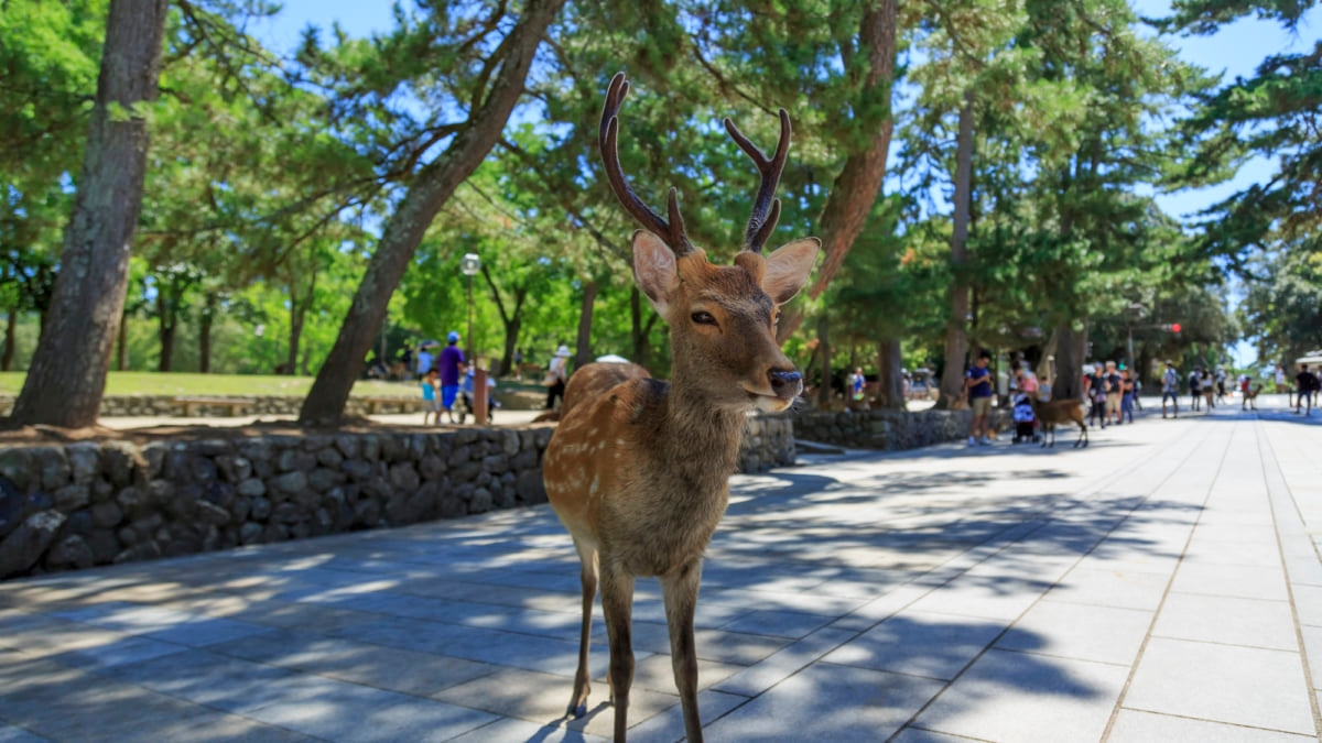 A Guide to Nara Park, Japan's Famous Deer Sanctuary