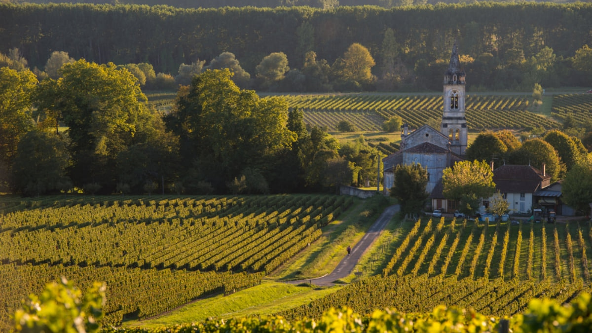 The Best Vineyards and Wineries to Visit in France