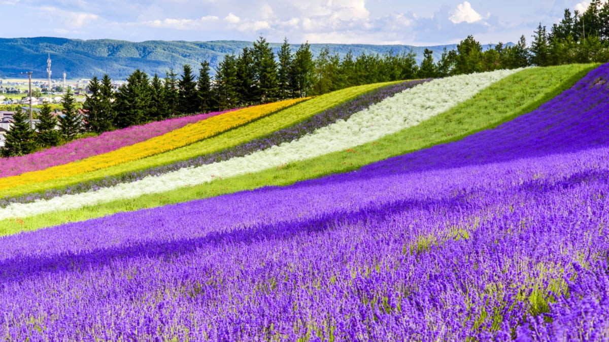 Things to Do in Hokkaido During the Summer