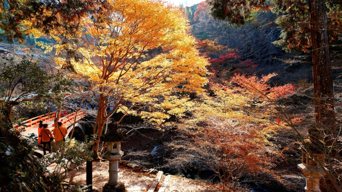 A Guide to the 5 Best Hiking Trails in and Around Tokyo