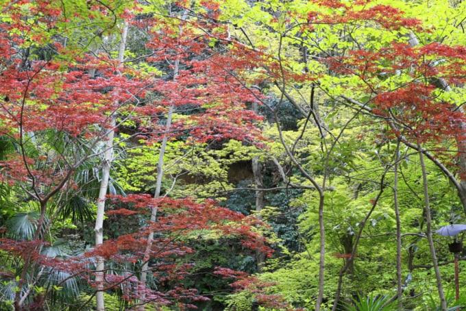 todoroki valley in setagaya,tokyo