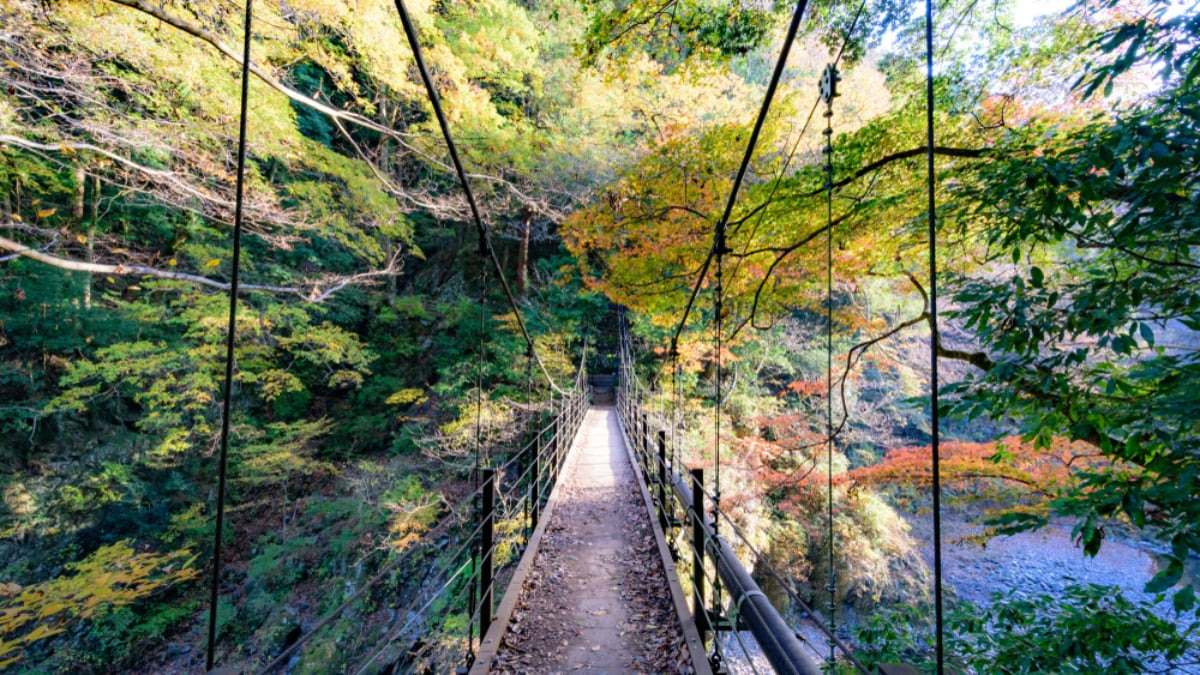 7 Beautiful Scenic Spots and Nature Escapes in Tokyo