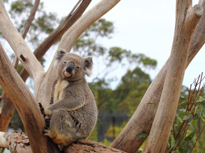 symbio wildlife park in Australia