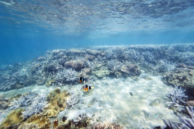 Diving in South Penghu Marine National Park