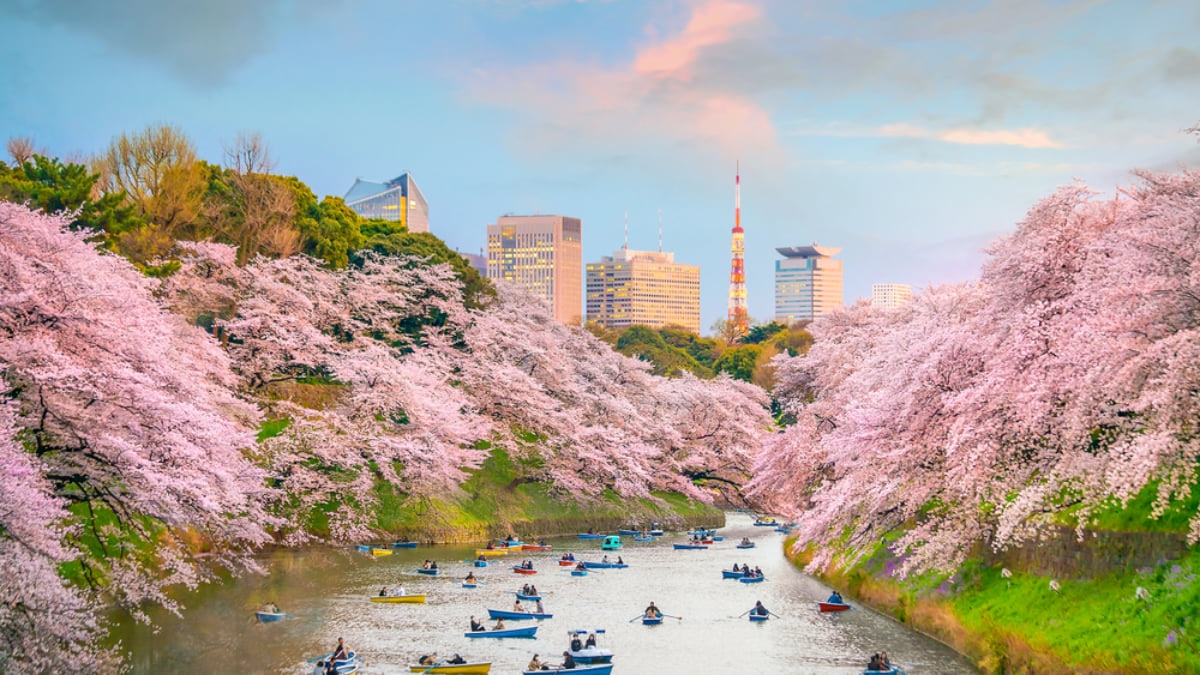 Popular Cherry Blossom Festivals Cancelled in Japan for this Spring