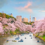 Major Cherry Blossom Festivals Cancelled in Japan for this Spring