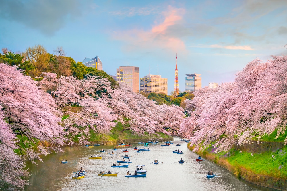 Popular Cherry Blossom Festivals Cancelled In Japan For This Spring Skyticket Travel Guide