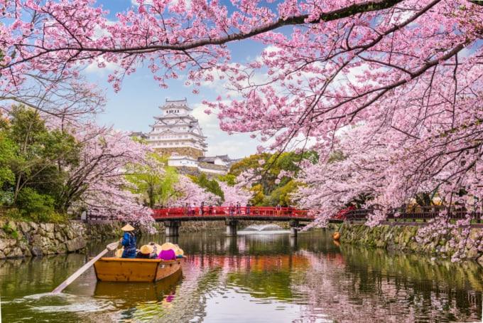 cherry blossoms around Japan