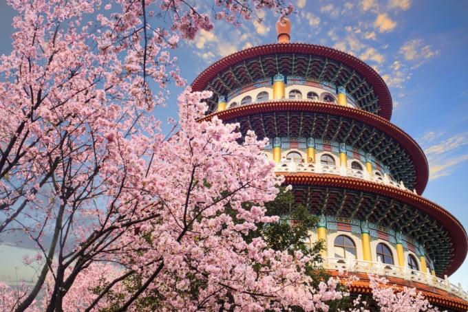 Taiwan Cherry Blossom Temple